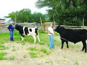 The Ely Times: Moore sisters find time to raise steers for fair